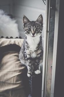 Uwielbiam koty