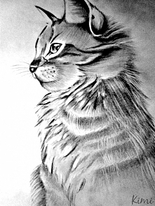Kot, praca z 2012 roku, wykonana ołówkami, na podstawie zdjęcia z internetu.