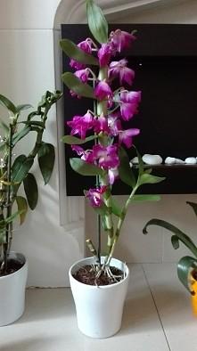mój nowy kwiatuszek :)