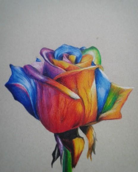 Mój rysunek róży ^^ Wykonany kredkami Polychromos ^^ Jak wam się podoba ?