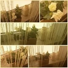 dekoracje do domu  ♡♡♡ W słonecznym pokoju- Eustoma biała w doniczce, kremowe, malowane słoiki, makaronowa, kremowa  firanka. Stylizacja świetnie wygląda na limonkowej ścianie.