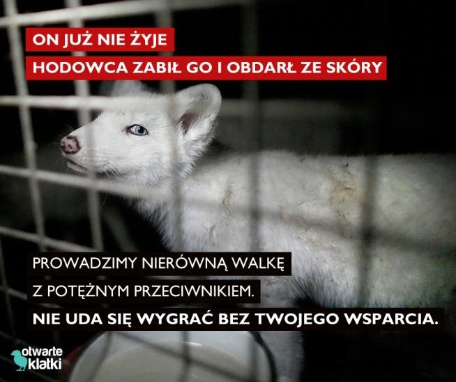 Co roku sto tysięcy zwierząt w Polsce ginie tylko dlatego, że ma piękne futro :'( Nie zgadzasz się na to? Kupuj odpowiedzialnie i nie wspieraj marek, które w swoich kolekcjach używają naturalnych futer. Poznaj sklepy, które dołączyły do akcji Sklepy wolne od futer  link w kom