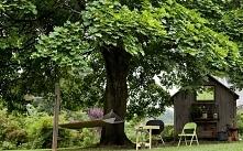 Wielkie drzewa liściaste z ...