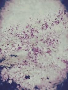 Jedne z moich ulubionych kwiatów ♡.♡