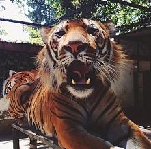 #Animals#