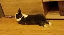 aleee królik się zmęczył ☺