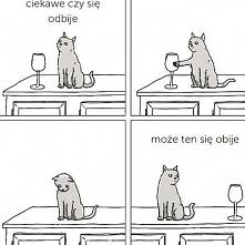 typowy kot