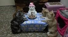 Kocie urodziny :D