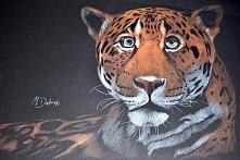 leopardzik