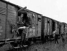 Sami swoi(1967) Jest to opowieść o zwaśnionych rodach Pawlaków i Kargulów. Przed wojną Kargul zaorał Pawlaków pole na trzy palce, co spowodowało, że spłonęły dwie stodoły, polał...