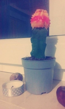 Kaktusik. Doniczka pomalowana farbą i świeczka ozdobiona tasiemką(przeze mnie).