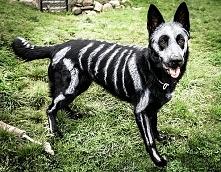Halloweenowy pupil <3