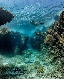 Podwodny Raj na Bahamach