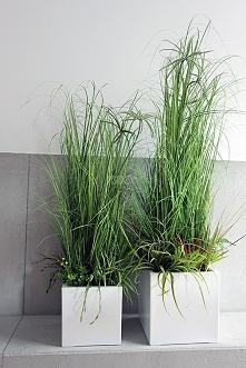 sztuczne trawy w pięknych donicach od tendom