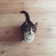 Luśka :-) <3   Kotka Dachowiec Oczy Biało-Szary Kotek