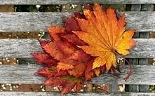 jesień *-*