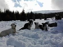 pierwszy śniegowy spacerek ...