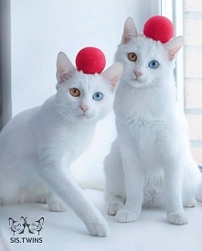 Zakochałam się w tych kotach, mimo że zazwyczaj za kotami nie przepadam :)