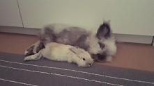 Moje króliczki ❤ Dziunia 9 tygodni & Kicuś 3 latka.