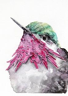 Koliber - plakat, reprodukcja