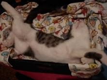 Ogon należy do Kota czy Kot...