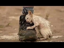 Real Life Heroes ★ When people help animals