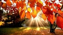 Za co kochamy jesień? I jak...
