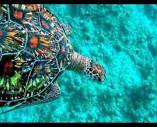 żółwik (: