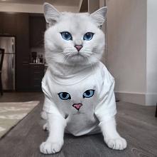 Chętnie przygarniemy zarówno kociaka jak i koszulkę:)