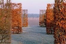 ••West garden by Tom Stuart...
