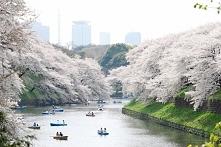 Japonia! :)