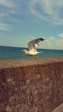 ♡ Gdynia ♡