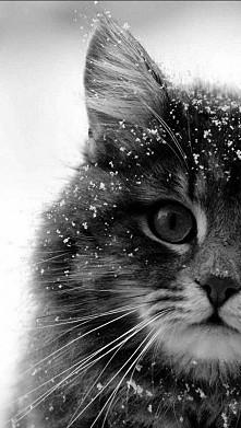 śnieżek