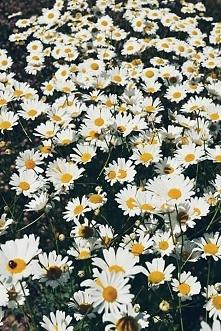 Kwiatuszki *.*