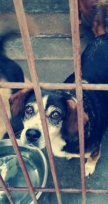 Dzisiaj miałam okazję pójść do schroniska. Szczerze aż serce boli gdy widzi się te kochane stworzenia w klatkach. Zachęcam wszystkich do adopcji i pomocy w schroniskach. Nie bąd...