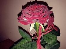Róża <3