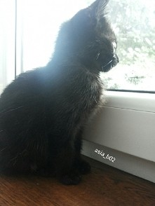 Moje zdjęcie i mój kot ;D