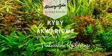 Akwaium roślinne, akwarium ogólne i akwarium biotopowe na podwodnekrolestwo.pl