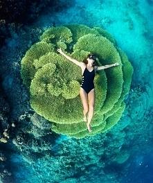 Koralowiec na wyspie Bunake...