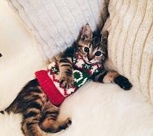 Kotek w świątecznym sweterku
