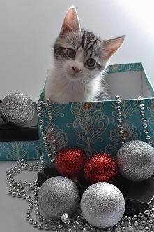 Urocza świąteczna ozdoba :)