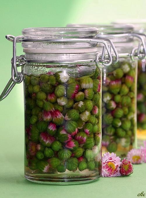 Marynowane pączki stokrotek  Składniki:   200 ml pąków kwiatowych stokrotki   80 ml wody   80 ml octu np. winnego lub jabłkowego   0, 5 łyżeczki soli   Szczypta kwasku cytrynowego  Kwiaty zbieramy przed rozwinięciem pąków i przechowujemy w lodówce.  Tuż przed przygotowaniem płuczemy pod bieżącą wodą i odsączamy na sicie. Sparzamy kwiaty w gotującej się wodzie przez 1 minutę, odsączamy i przelewamy zimną wodą.  W małym garnku gotujemy wodę, dodajemy sól, ocet i kwasek cytrynowy. Pąki kwiatowe układamy w małych wysterylizowanych słoiczkach, zalewamy octem, zamykamy przykrywkami i pasteryzujemy 10-15 minut. Pozostawiamy do ostudzenia, aż pokrywka się zassie.  Po tygodniu będą gotowe do spożycia.  Kwiatowe kapary to ciągle niedoceniany dodatek do wielu potraw a szkoda, bo stokrotki są pyszne. Na surowo, lekko miętowe a po obróbce chrupiące i bardzo wytrawne. W związku z tym, że pączki stokrotek są delikatniejsze od innych kwiatów, to potrzebują trochę lżejszej zalewy octowej. Oczywiście jak ktoś chce, to może zalewę doprawić bardziej na ostro lub słodko, ale według mnie w wersji na kwaśno, smakują wybornie.