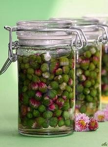 Marynowane pączki stokrotek  Składniki:   200 ml pąków kwiatowych stokrotki ...