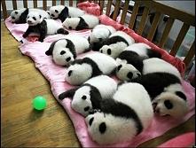 żłobek pand