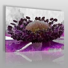 Wytworna purpura - nowoczes...
