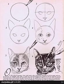 Jak namalować głowę kota. Chyba widziałam już to na zszywce ale nie jestem pewna, bo ten kotek jest piękny
