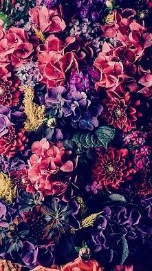 Cudowne kwiatki. Tapeta.
