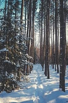 Zima jest fajna nie tylko p...