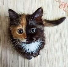 Kotka o dwóch twarzach - Yan