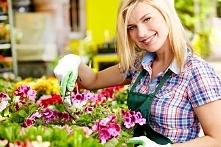 Rośliny ogrodowe, których nie musisz podlewać - poradnik dla leniwych